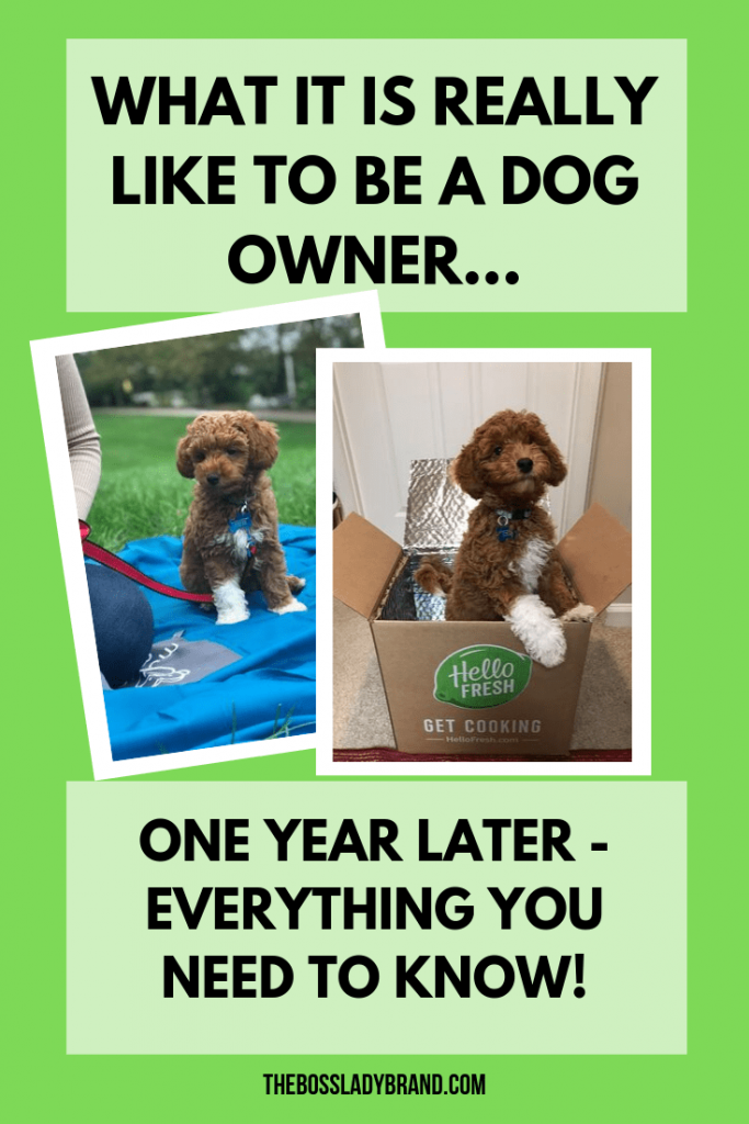 Here is all the info on what it is really like being a dog owner. Our dog Kaptain Turned 1 recently and we have also had him at home for a year!